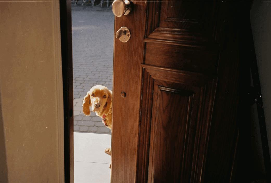 An open door with a dog peeking around the doorway.